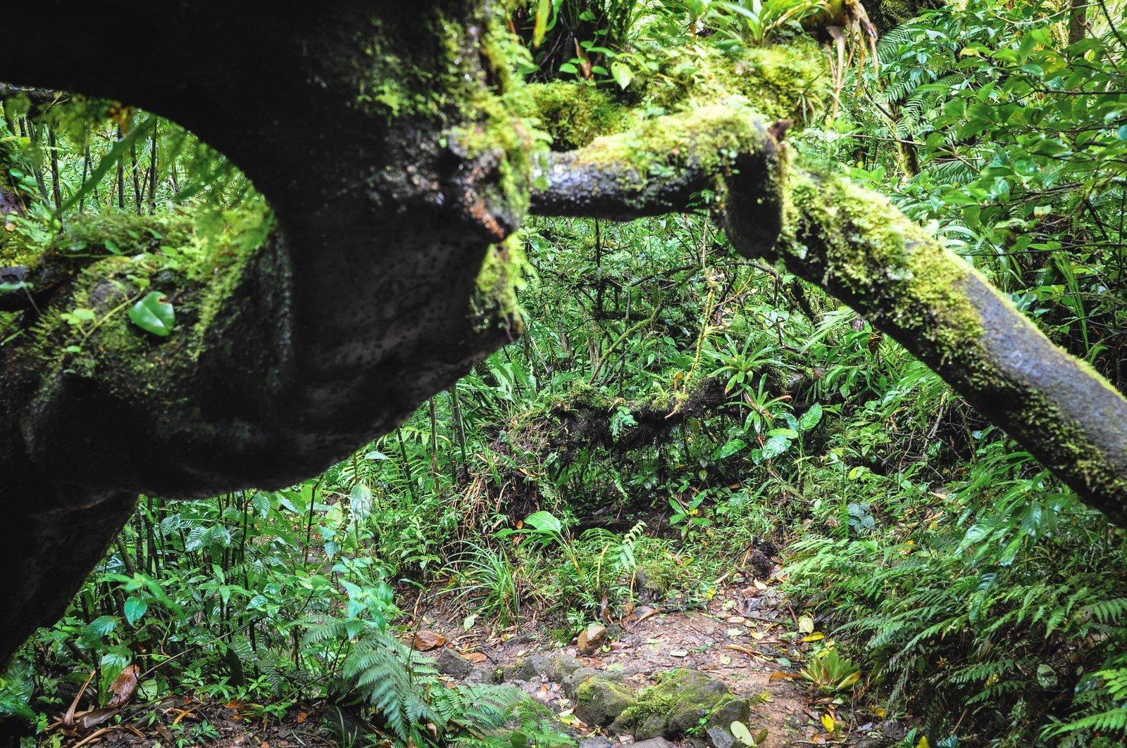 Seb jouant les aventuriers dans la jungle