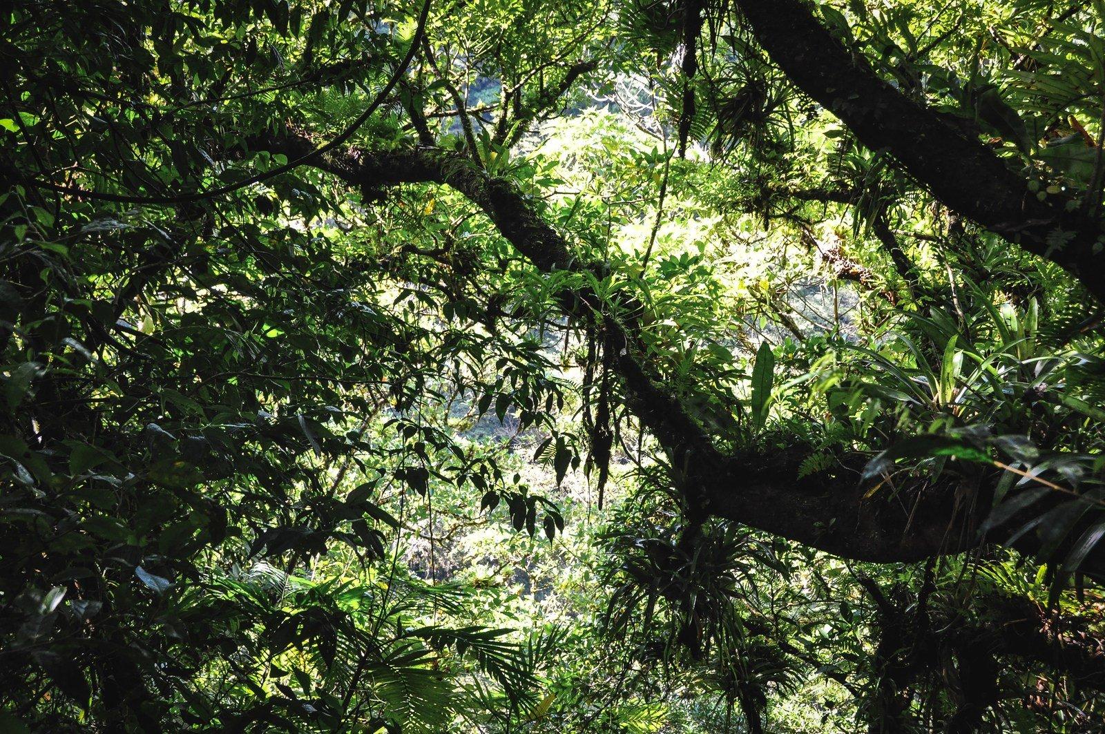 Jungle de Mombacho
