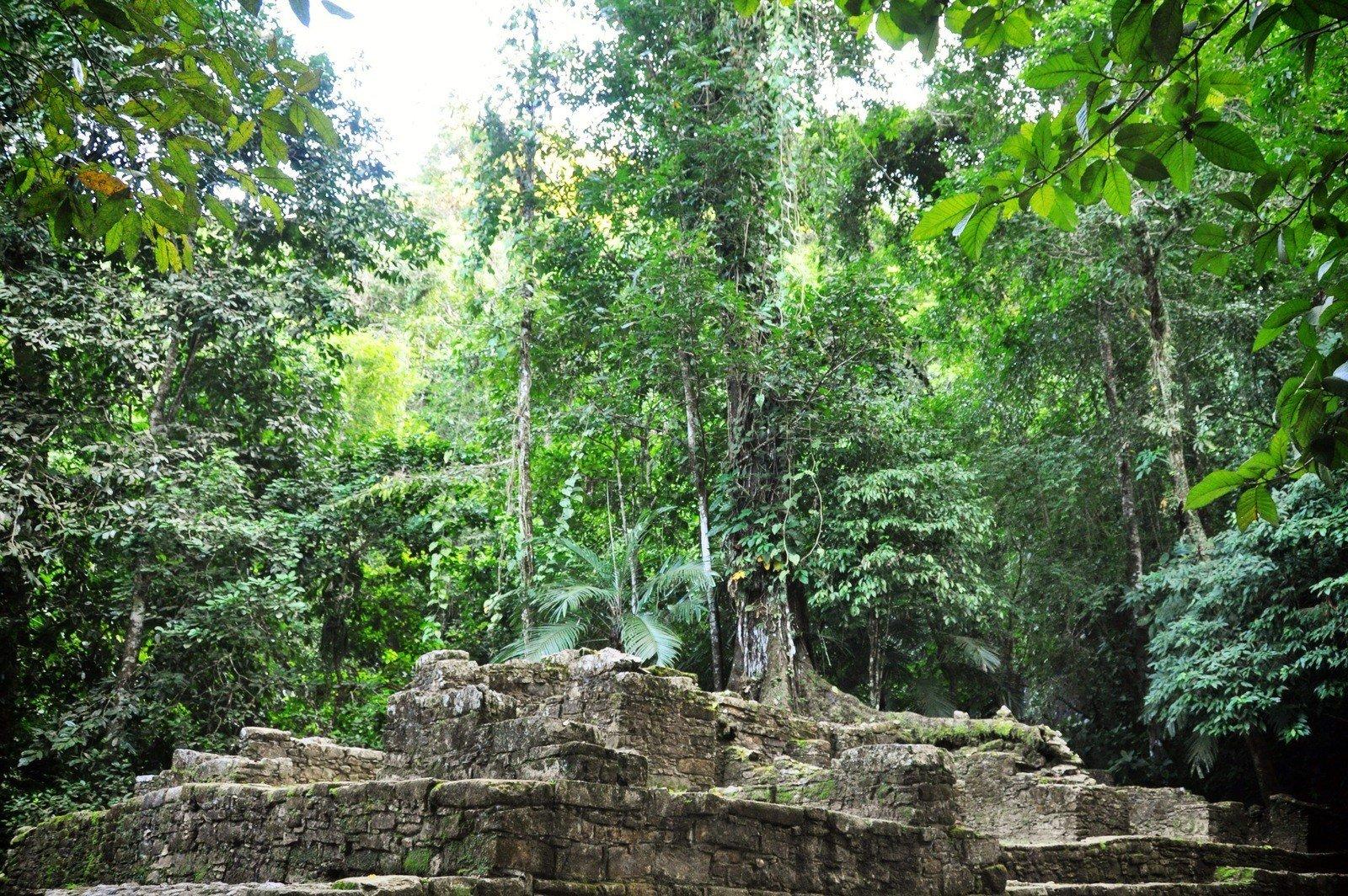 Ruines maya de Palenque