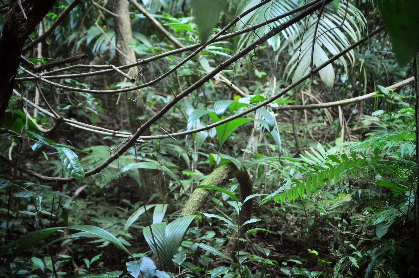 Végétation de la jungle à Palenque