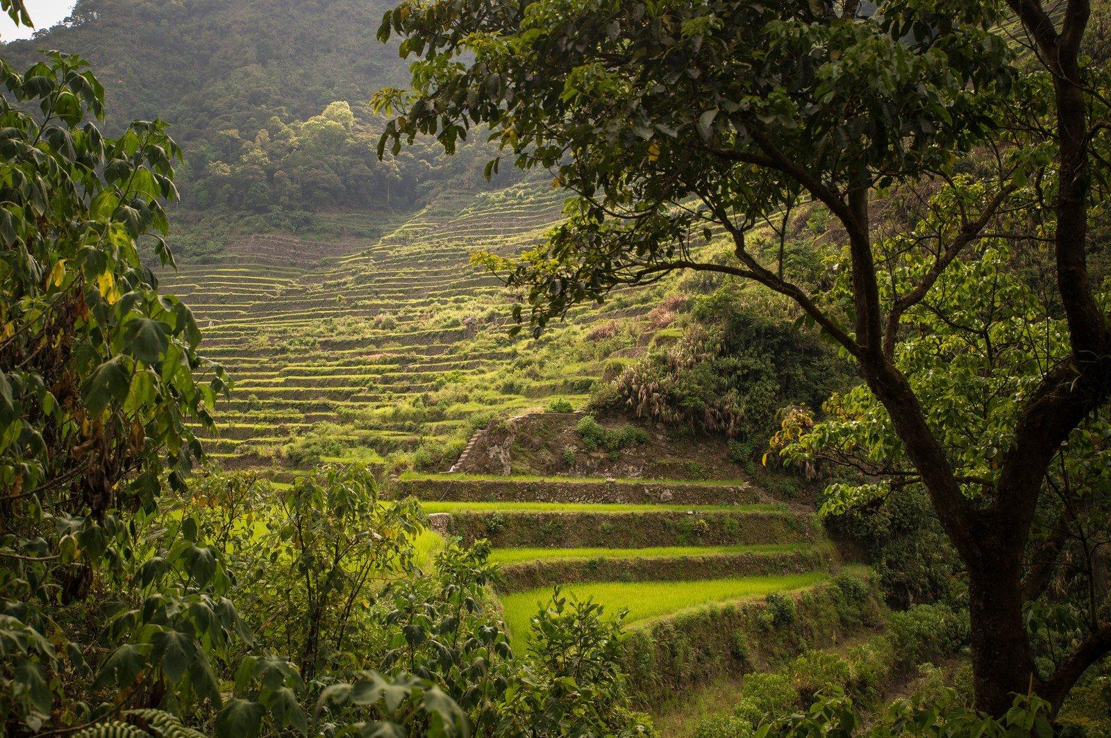 Au pied des rizières