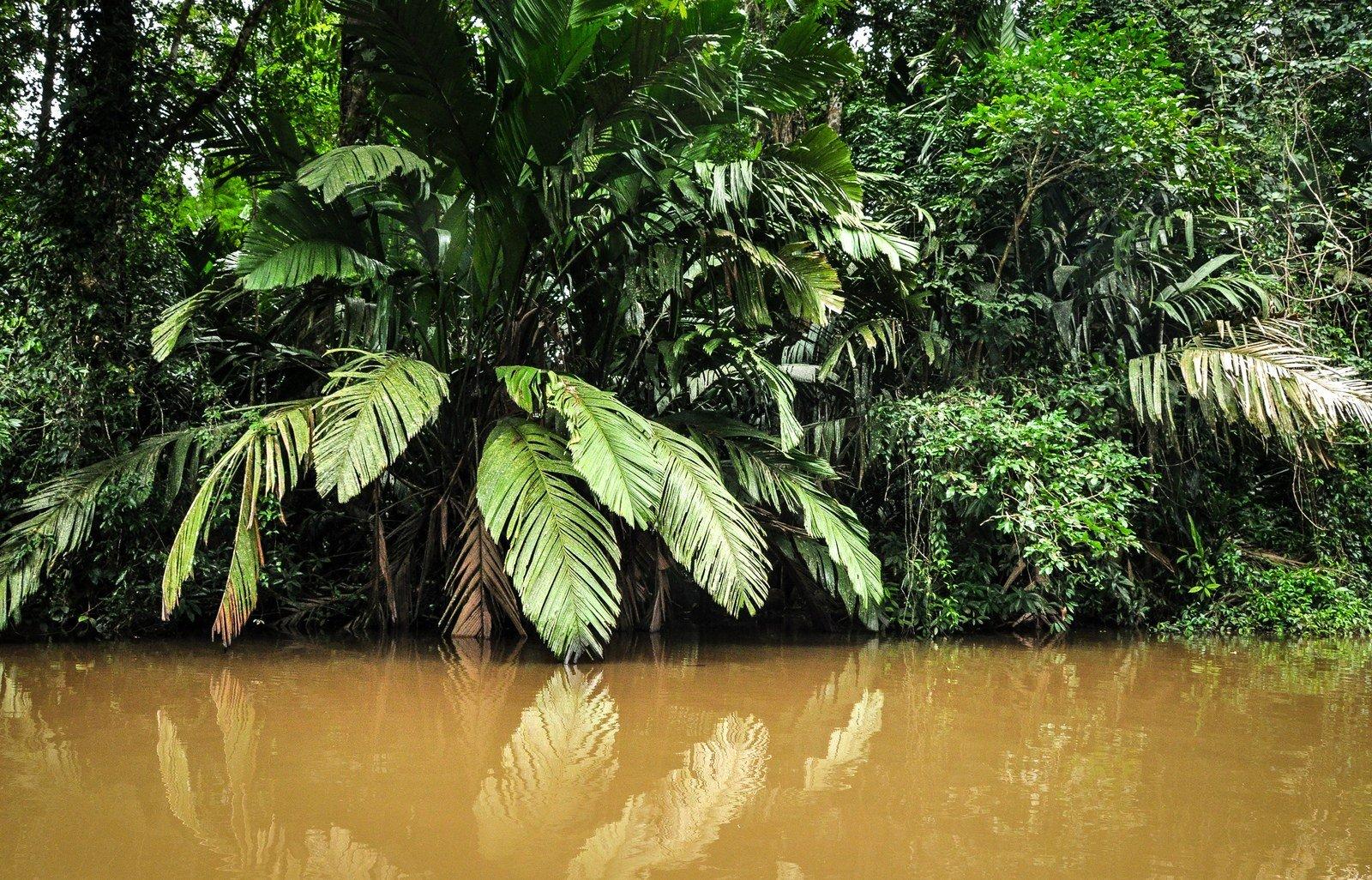 Rivière Tortuguero