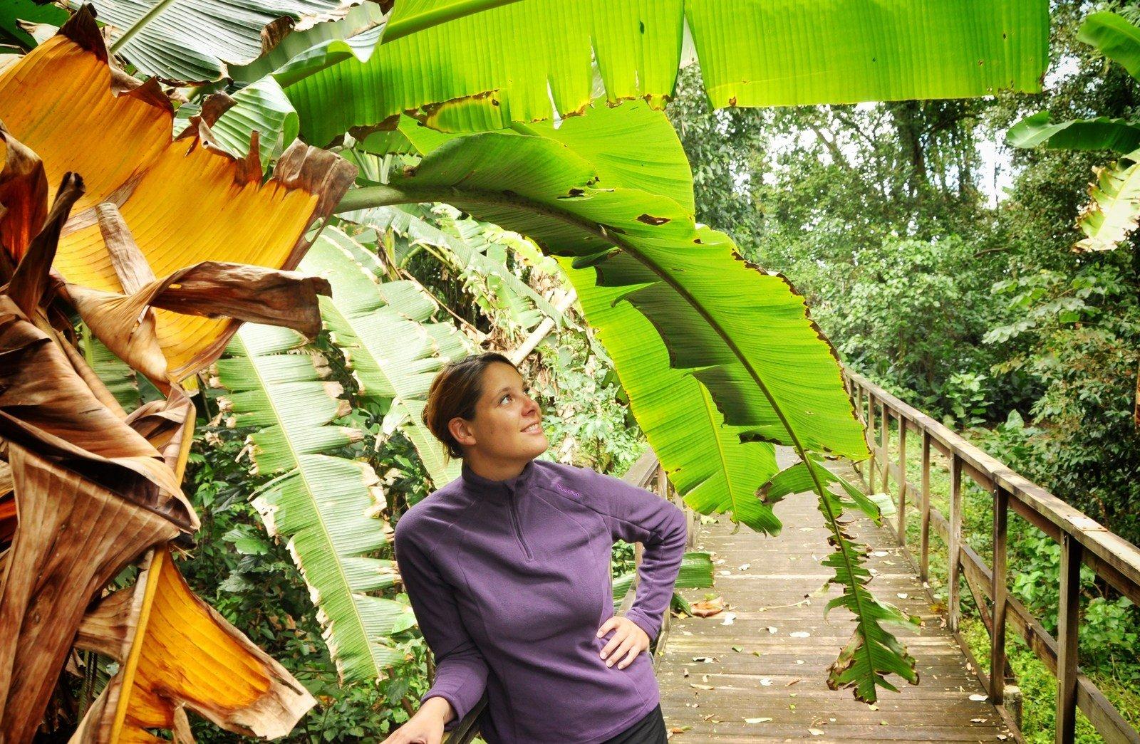 Manuelle, jungle du Honduras