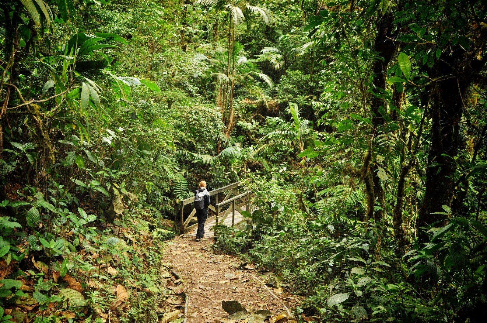 Dans la foret de Monteverde au Costa Rica