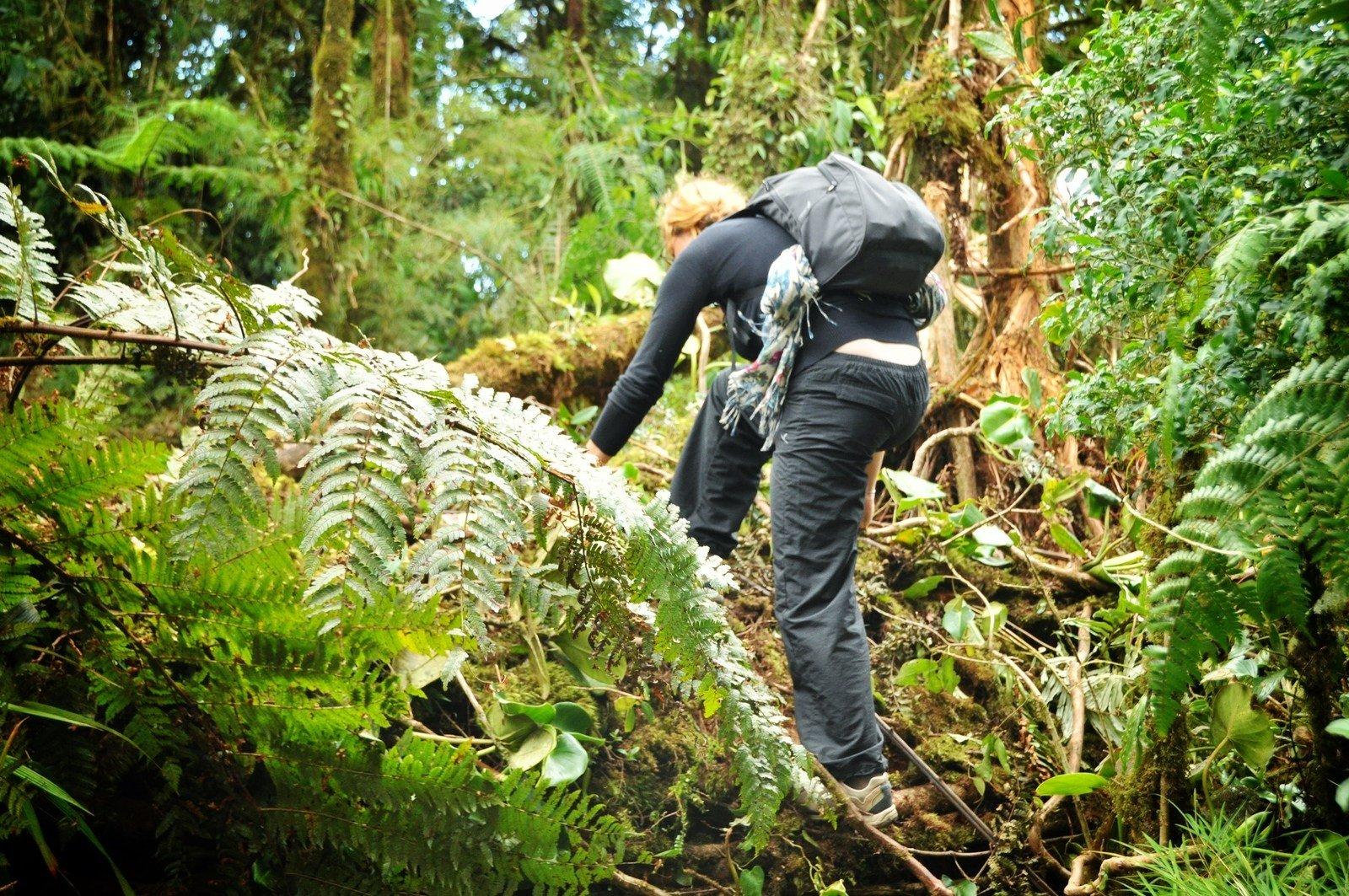 Foret de Monteverde, Costa Rica