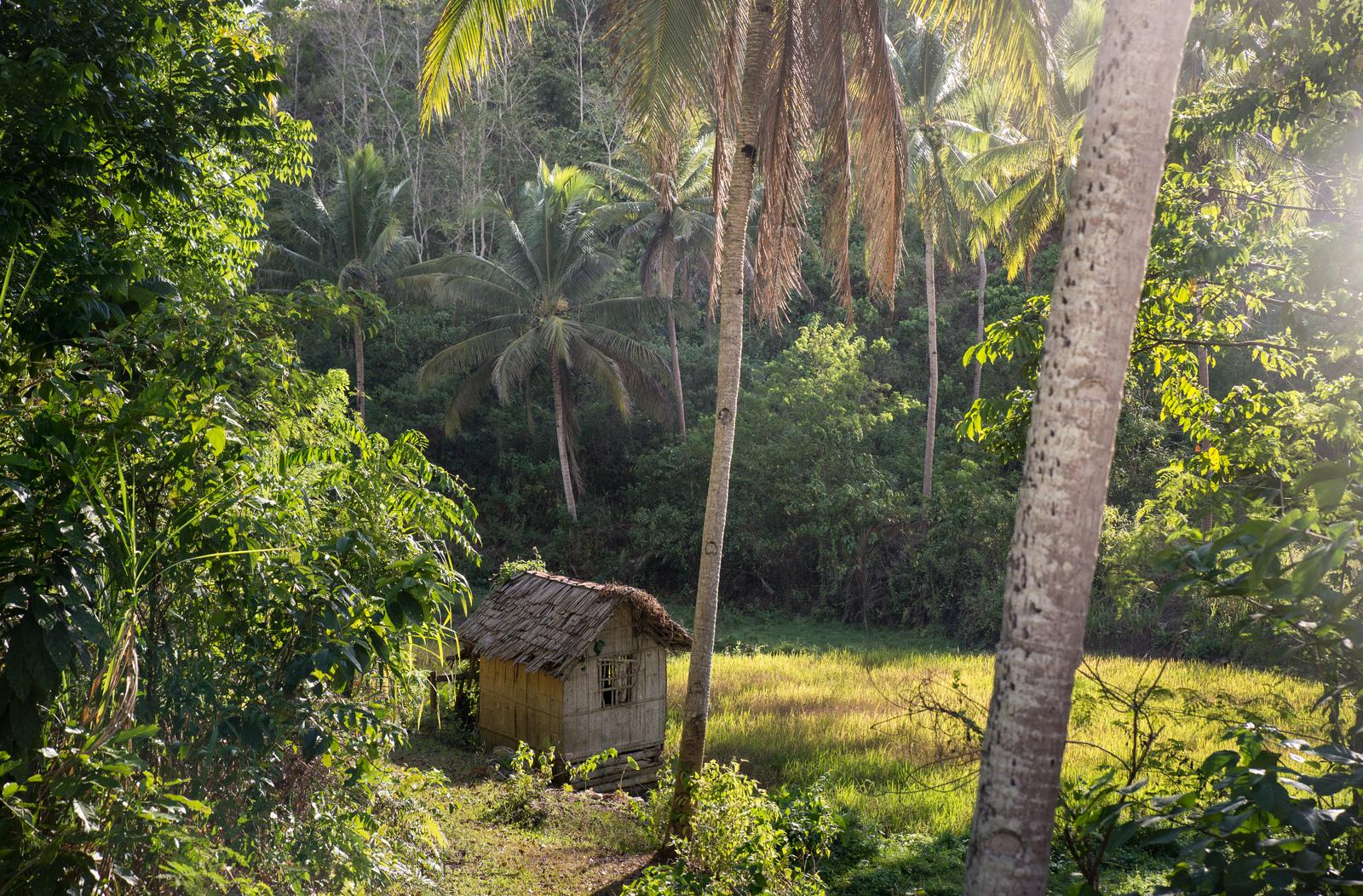 Au coeur de l'île de Bohol