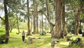 Manu in forest