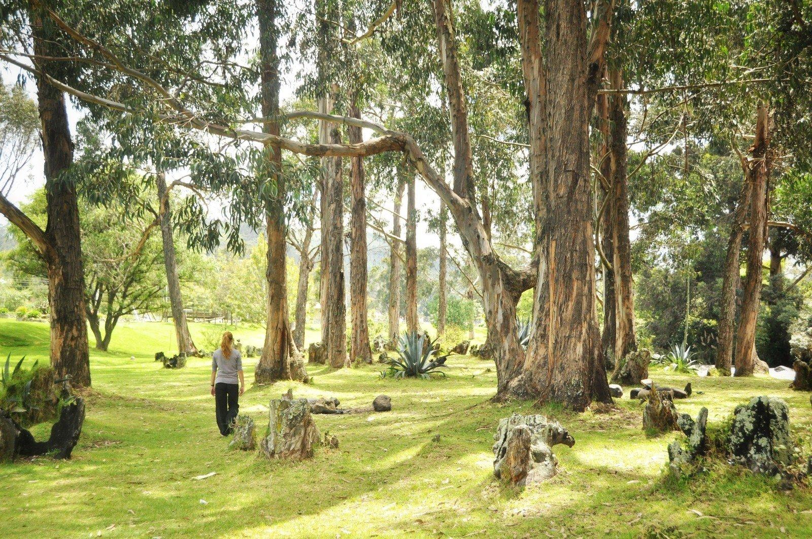 Manu in forest Cuenca
