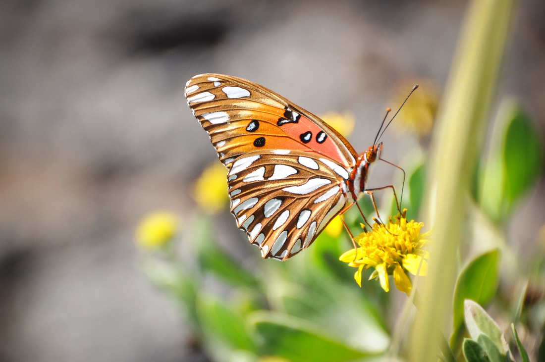 Photos d 39 animaux aux etats unis page 2 for Papillon new york
