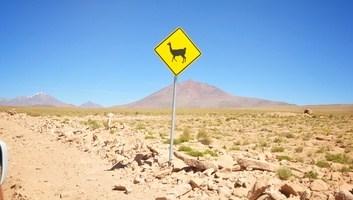 Attention aux lamas perou
