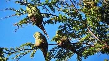 Perruches dans le parc torres del paine