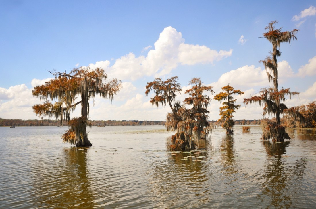 Marecages, Louisiane
