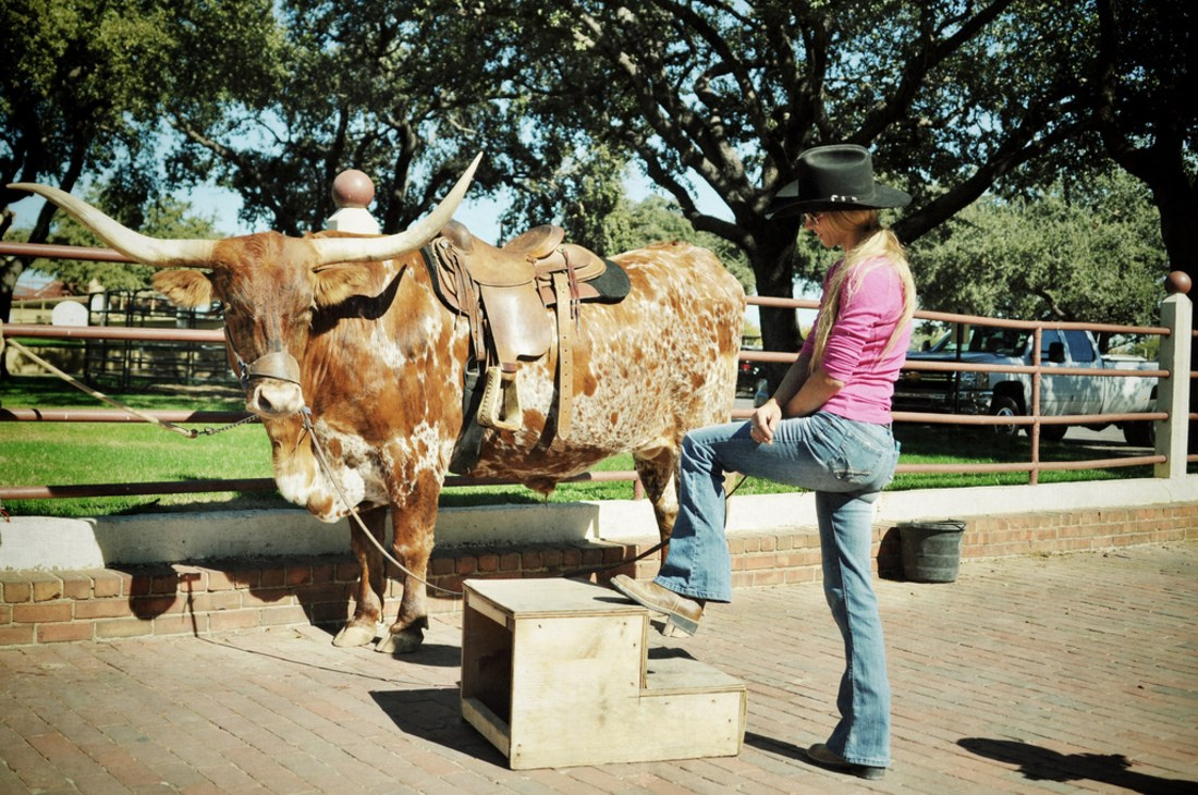Cow Girl et Longhorn au Texas
