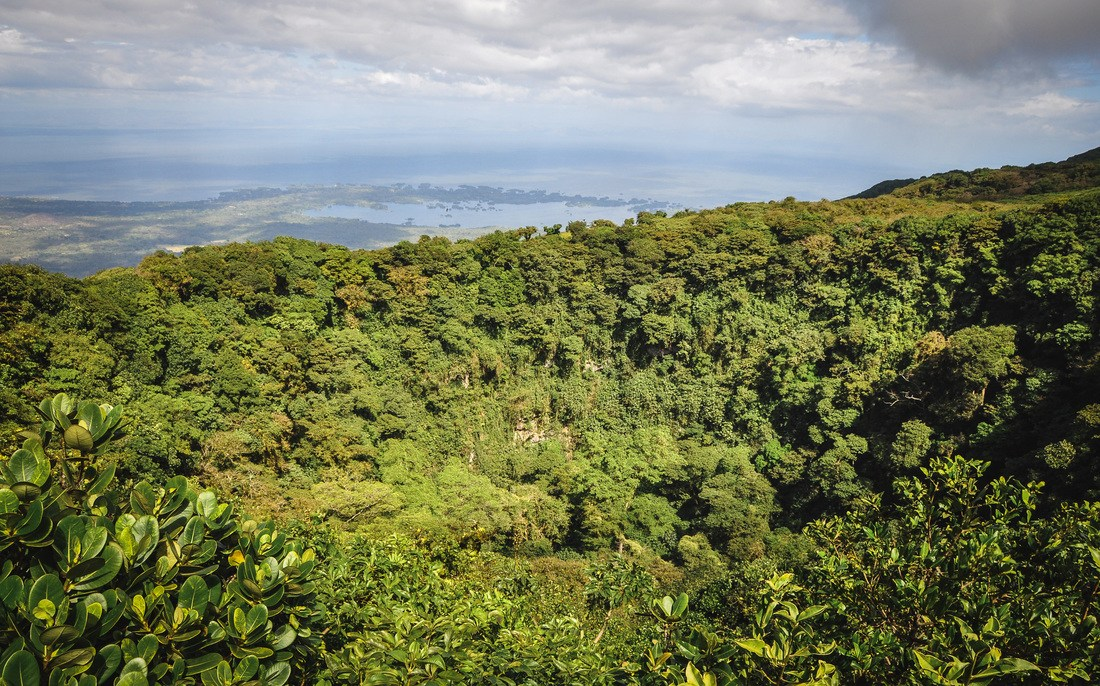 Cloud forest du Mombacho