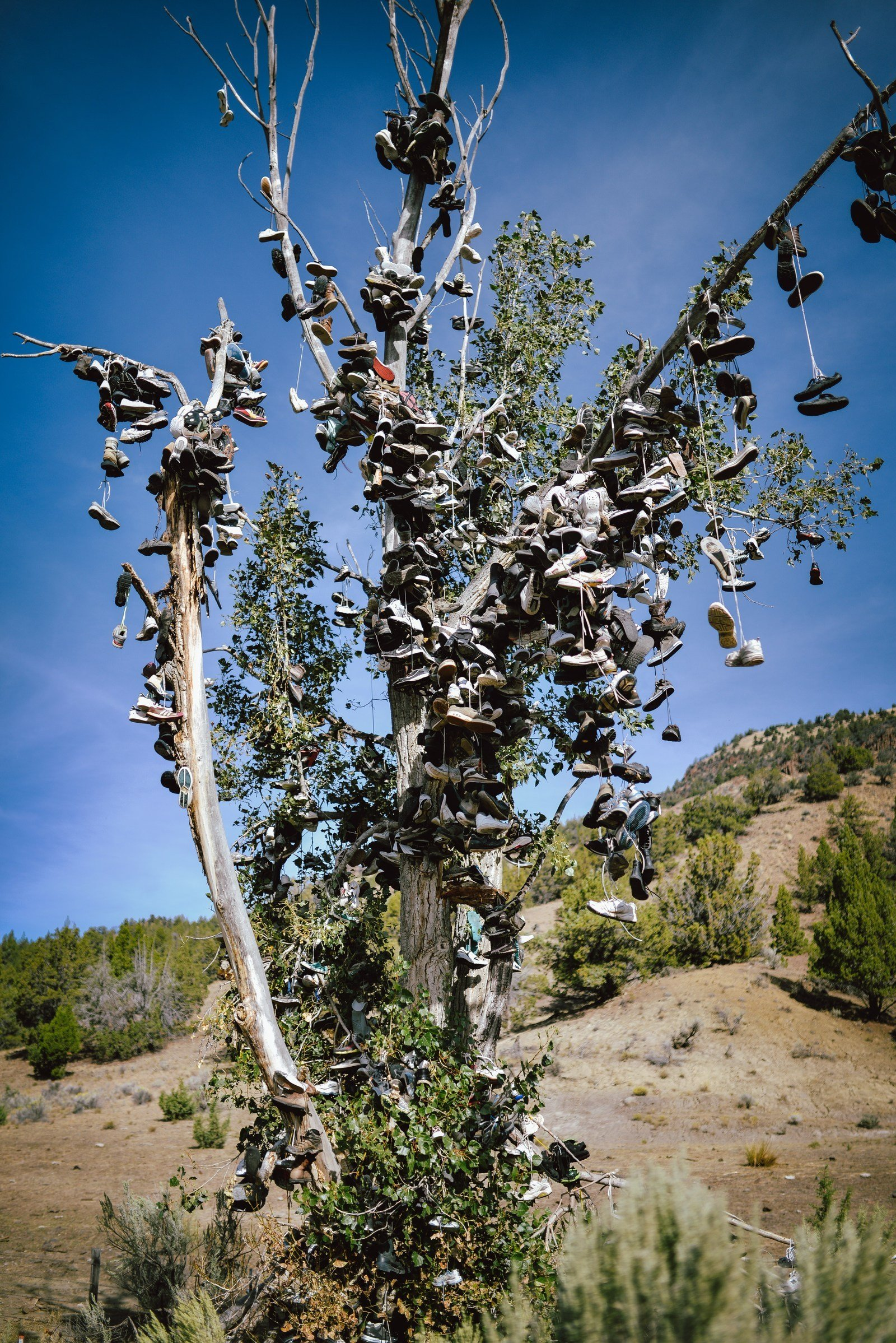 chaussures suspendues  u00e0 un arbre aux usa  ochoco highway