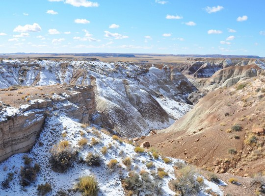 Petrified forest park