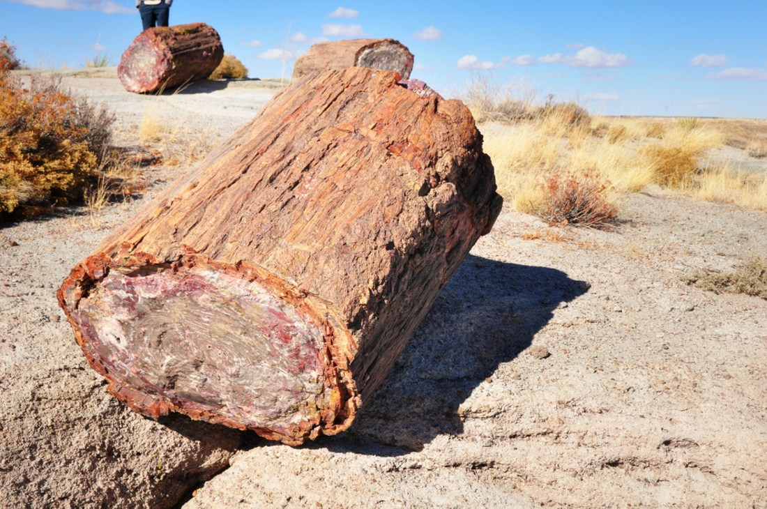 Bois pétrifié au Petrified Forest National Park