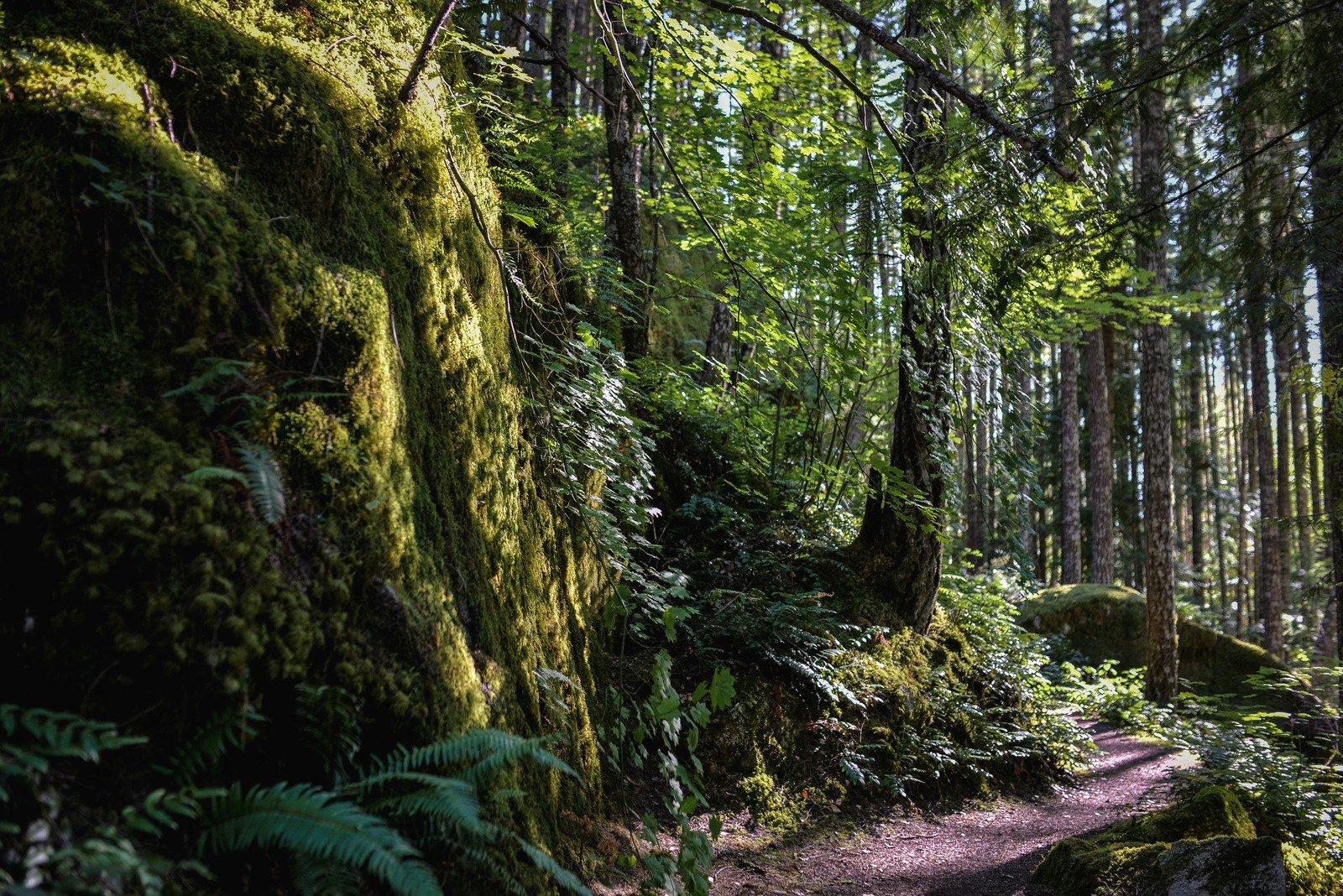 Dans la foret north cascades national park aux etats unis for Dans la foret