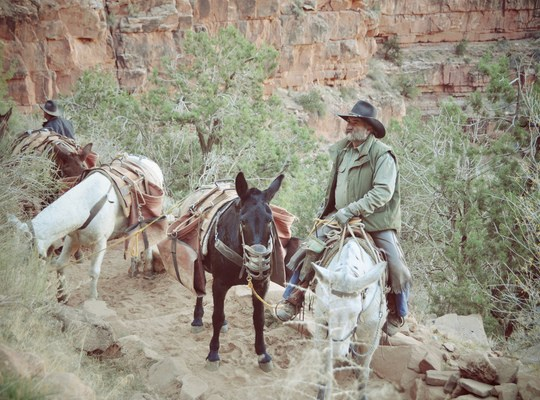 Grand canyon Cowboys