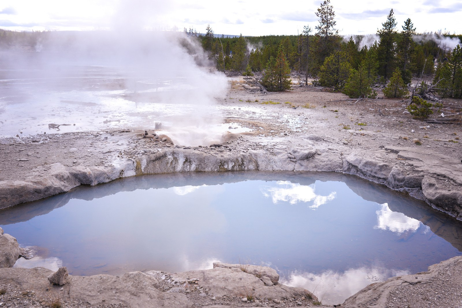 Sources d'eau chaude, Norris Geyser Basin Yellowstone