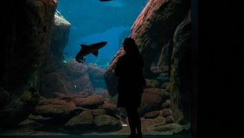 Tete a tete avec un requin