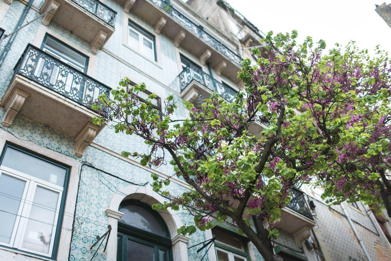 Festival de couleurs Lisbonne