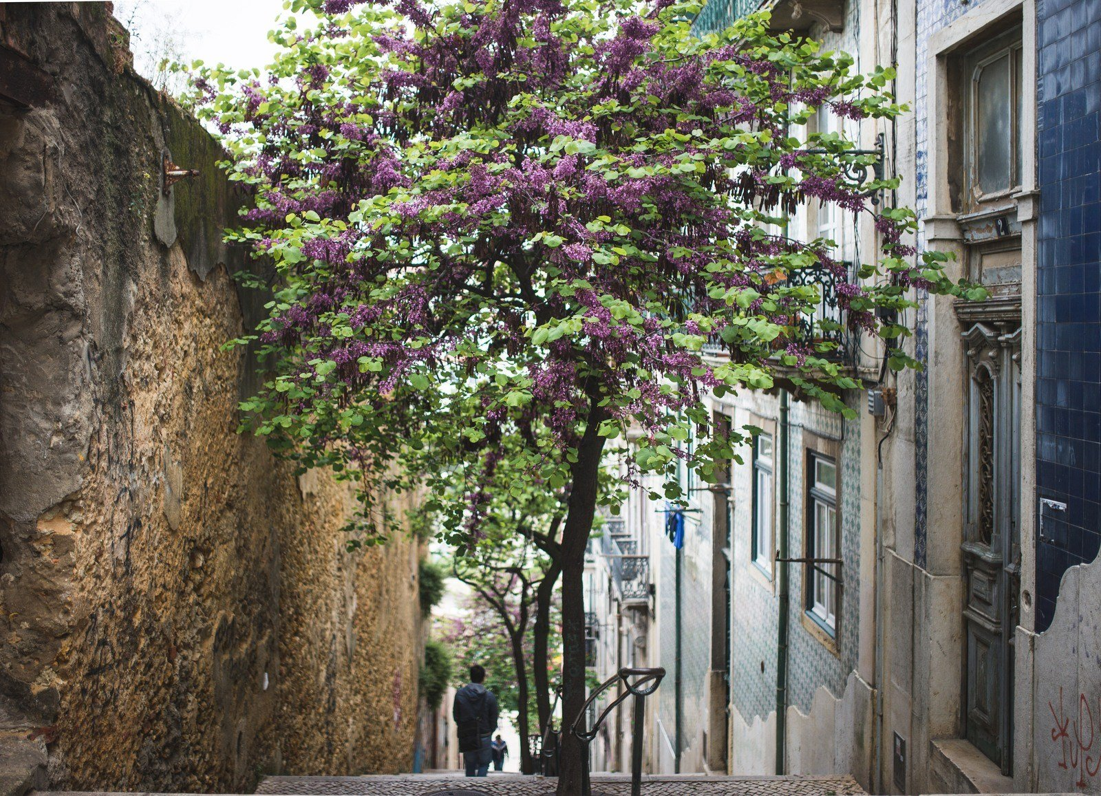 Arbre en fleur dans la Mouraria Lisbonne