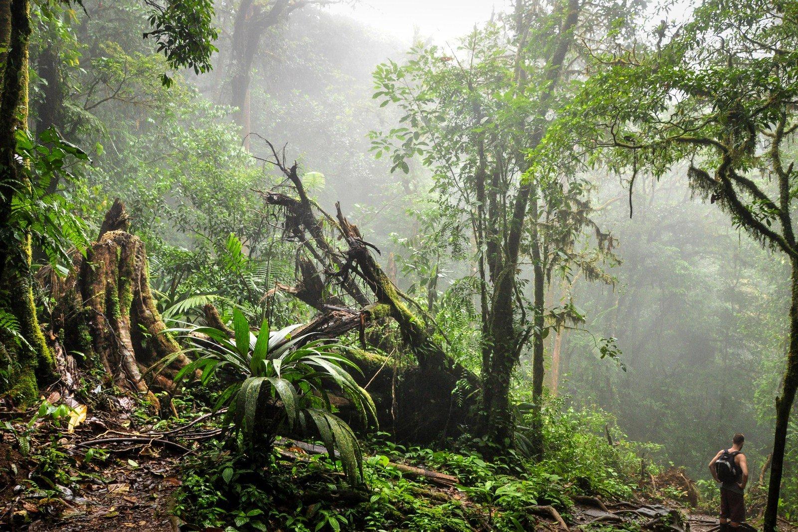 Jungle du Costa Rica Rio Celeste