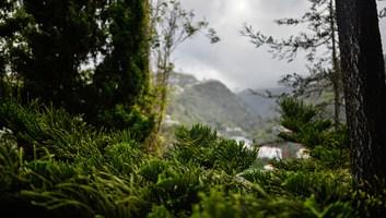 Vegetation de la laurisilva