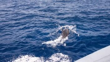 Dauphin nageant juste a cote de nous