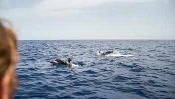 Admirer les dauphins