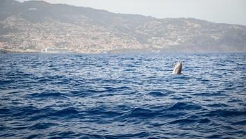 Dauphin sautant hors de l eau