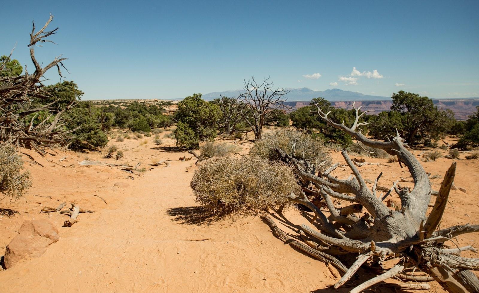 Désert de l'Utah Canyonlands