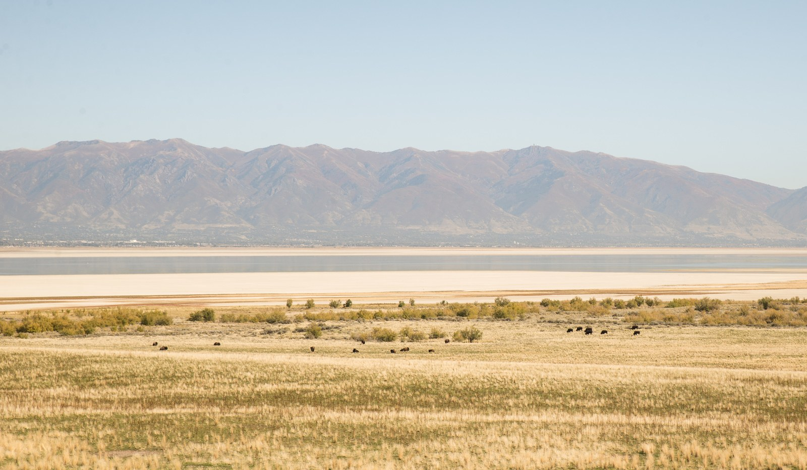 Prairie Antelope Island Antelope Island