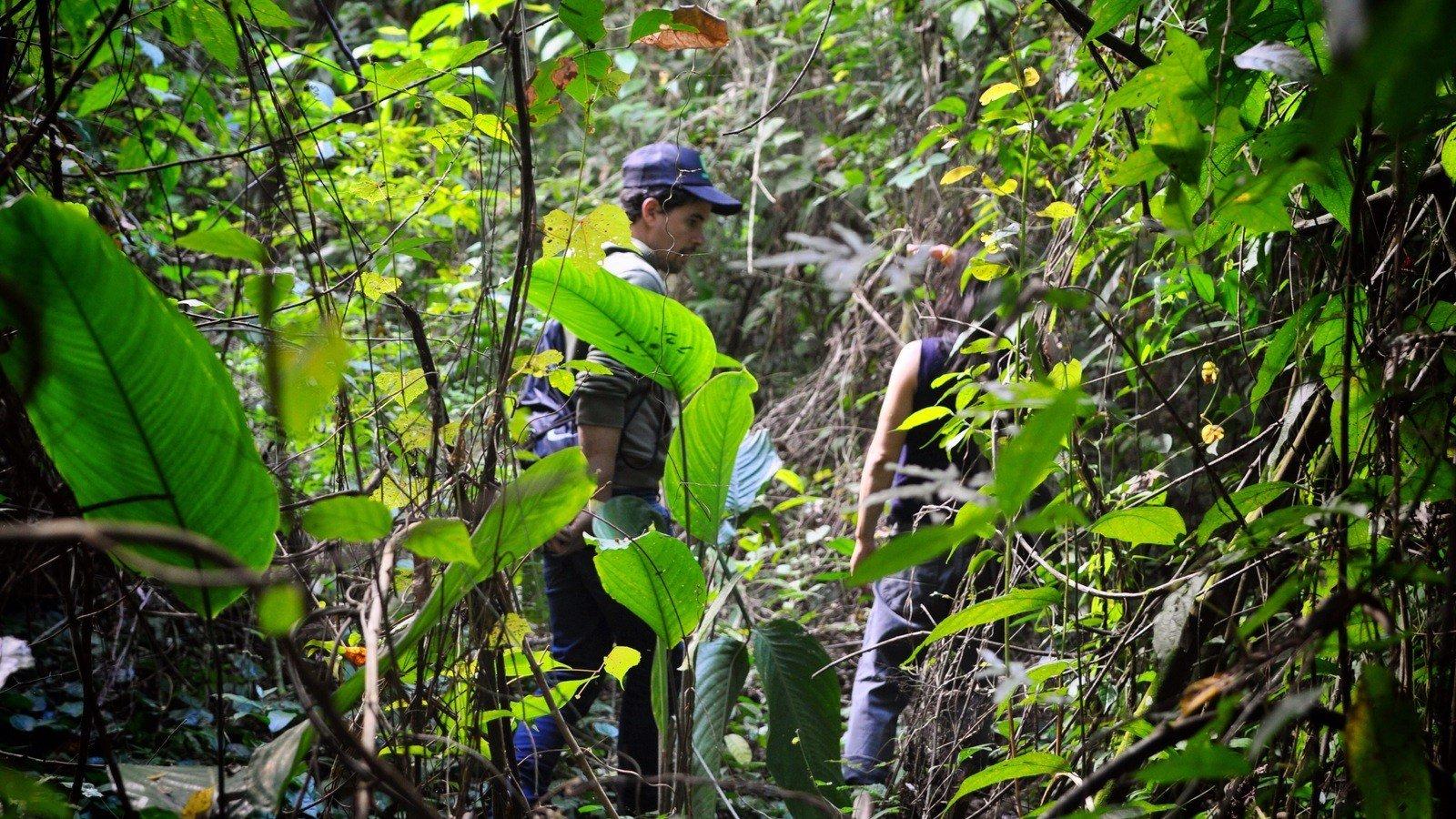 Guide dans le Chiapas Palenque