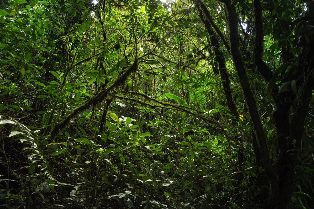 Jungle dense et sombre au Costa Rica