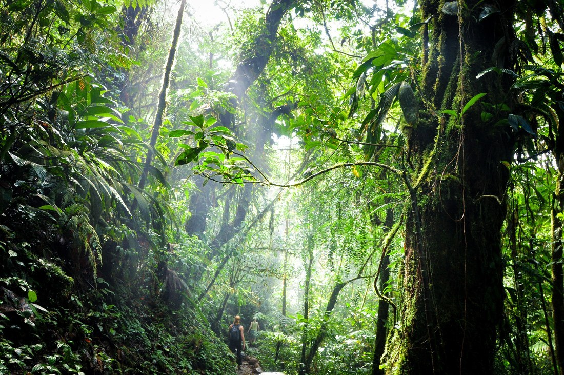 Au coeur de la jungle du Costa Rica