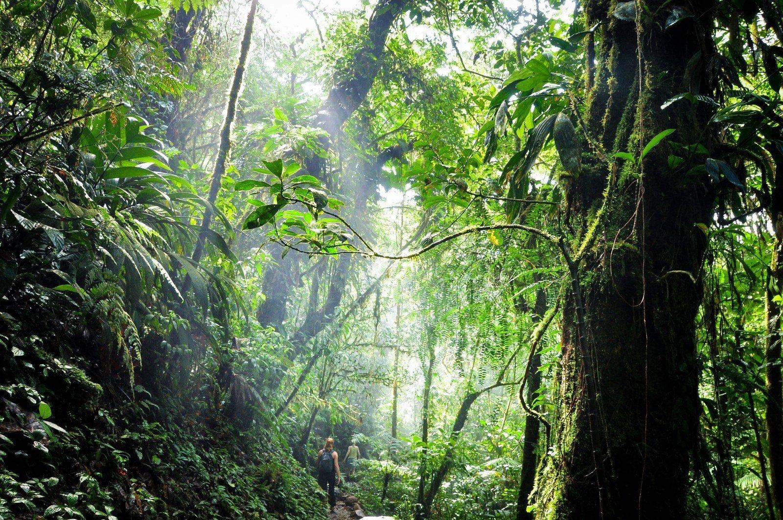 Au coeur de la jungle du Costa Rica Rio Celeste
