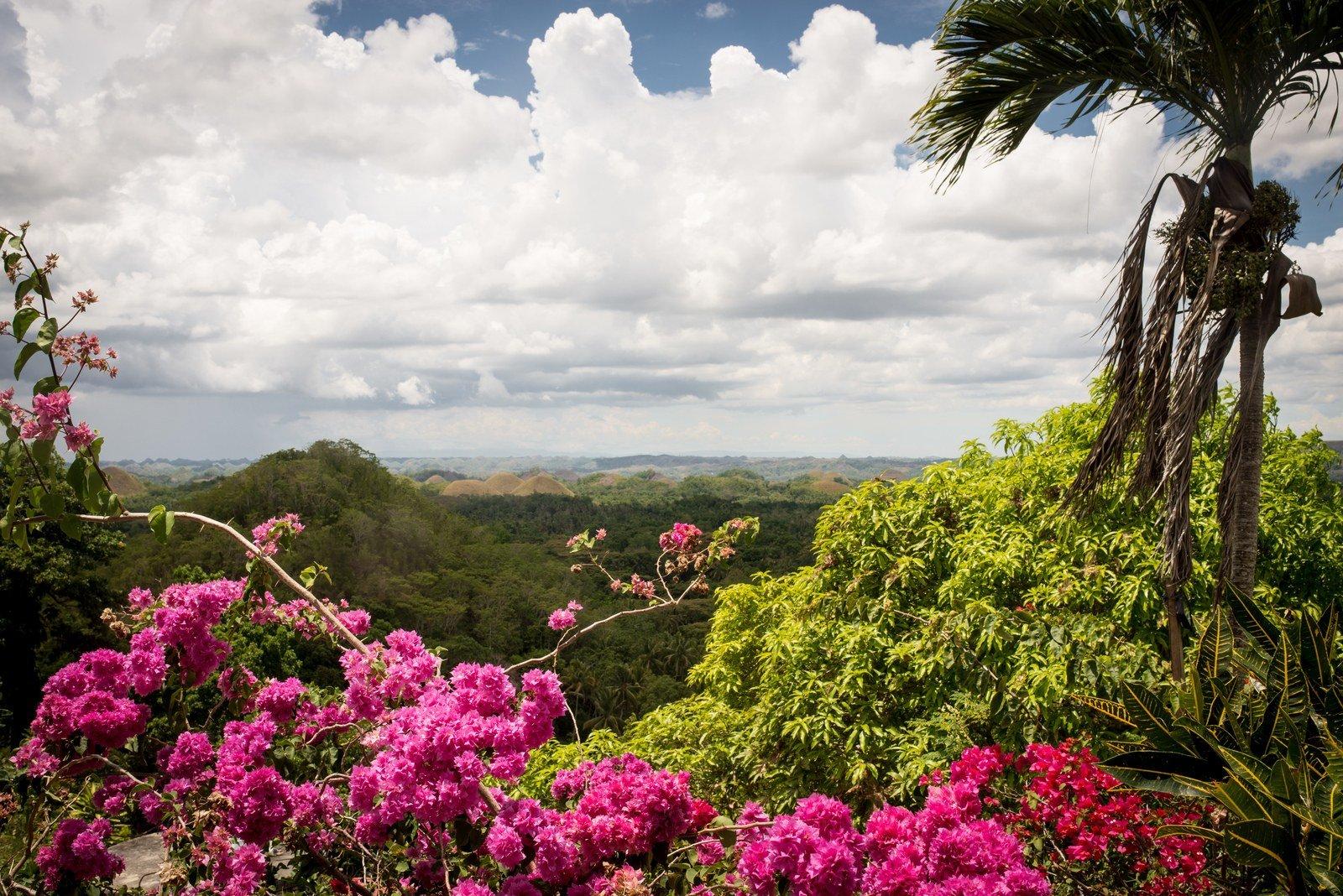 Végétation et fleurs des Philippines Chocolate Hills