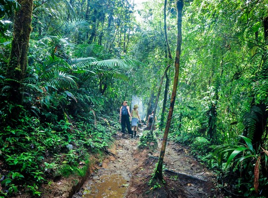 Se frayer un chemin dans la jungle