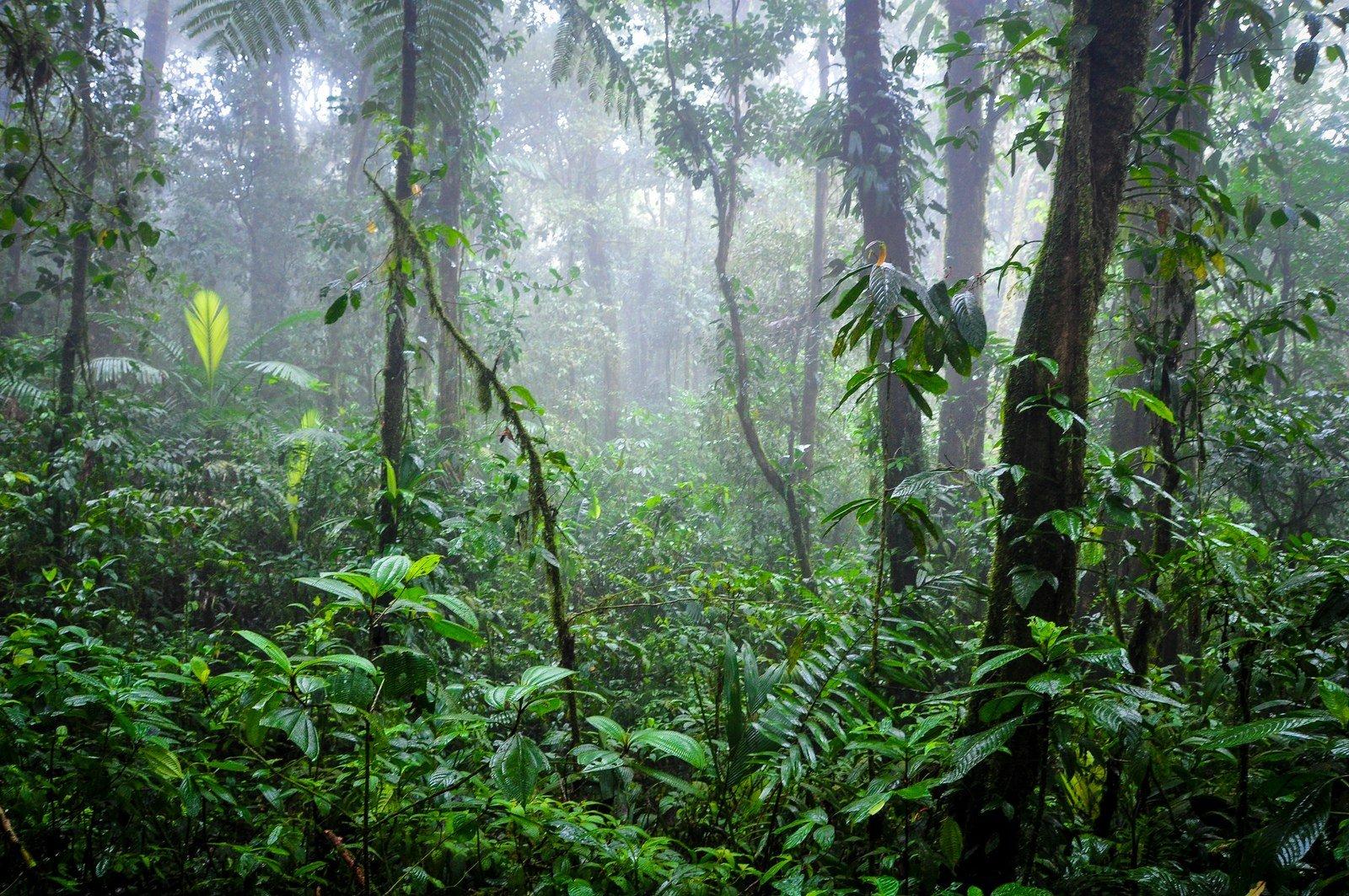 brume-dans-la-jungle