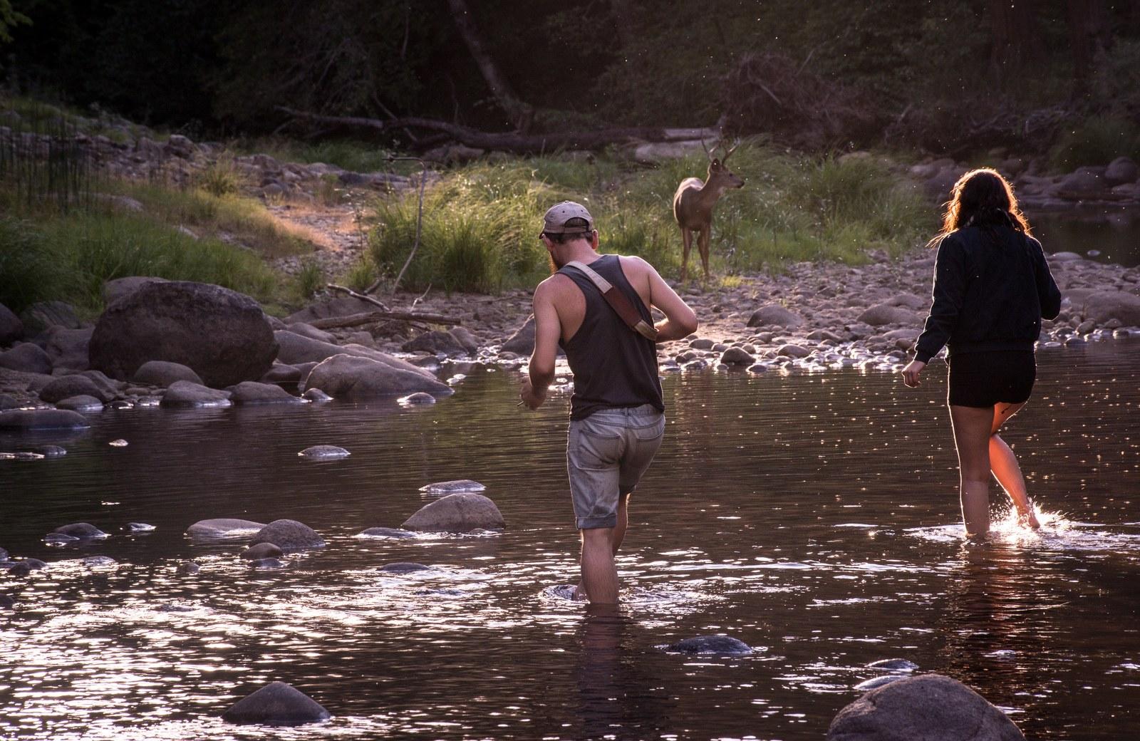 A la rencontre du Cerf Yosemite