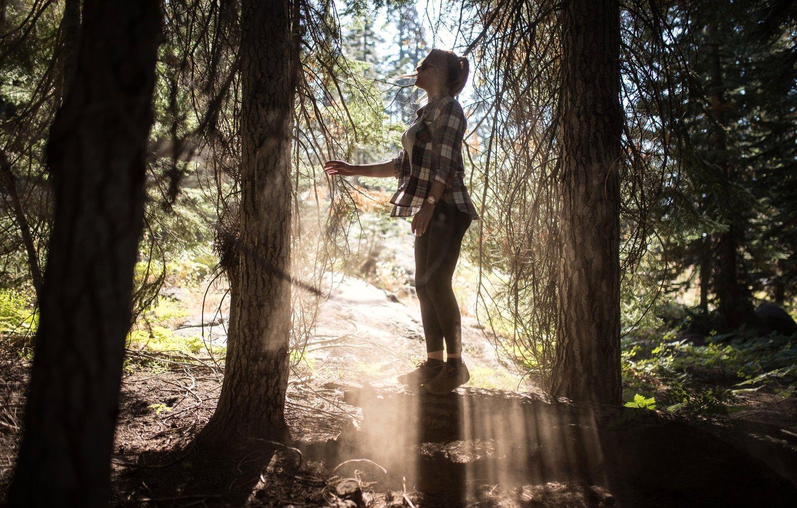 Au milieu de la forêt Yosemite