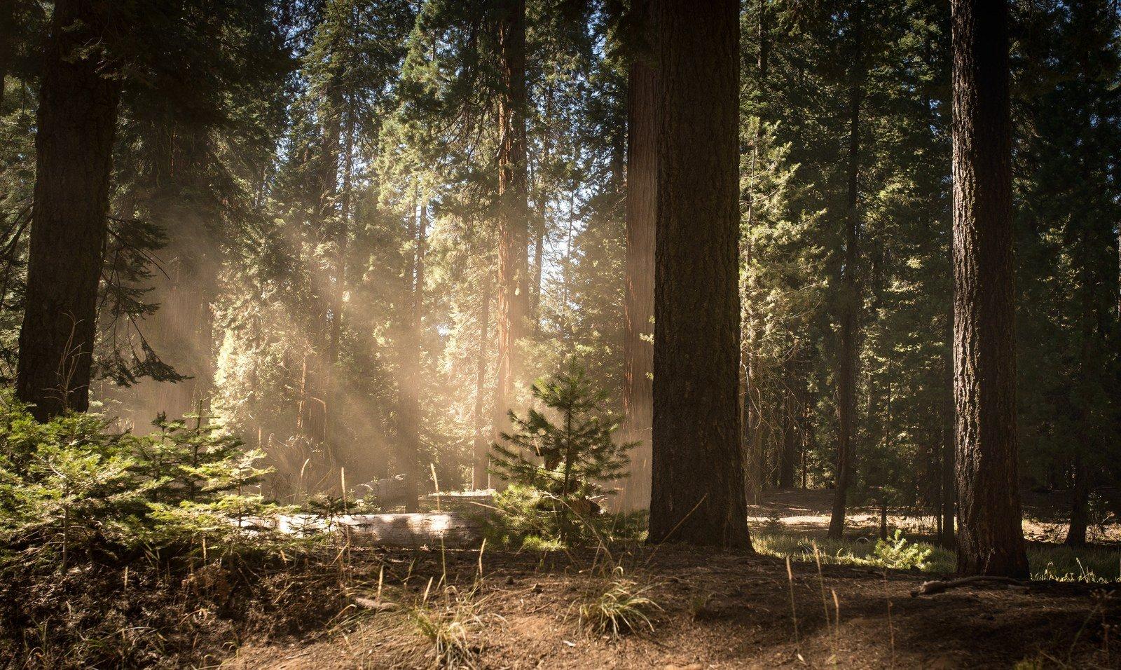 sequoia national park et sa for t de s quoias g ants en californie. Black Bedroom Furniture Sets. Home Design Ideas