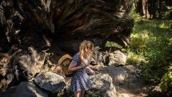 Balade a sequoia californie