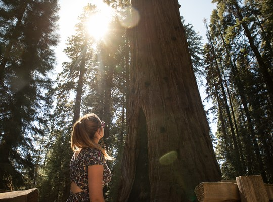 Prendre en photo General Sherman Tree