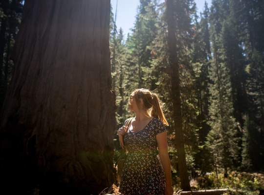 Manue, Sequoia