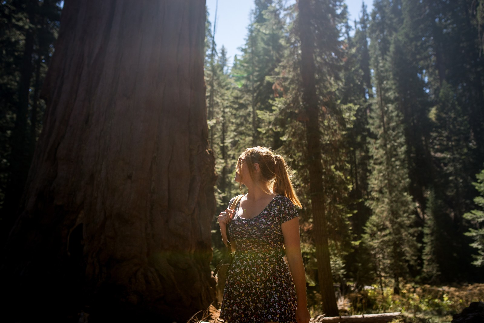 sequoia national park dating Year-round lodging and summer family camp in sequoia & kings canyon national parks.