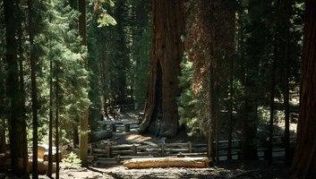 General sherman tree sequoia np californie