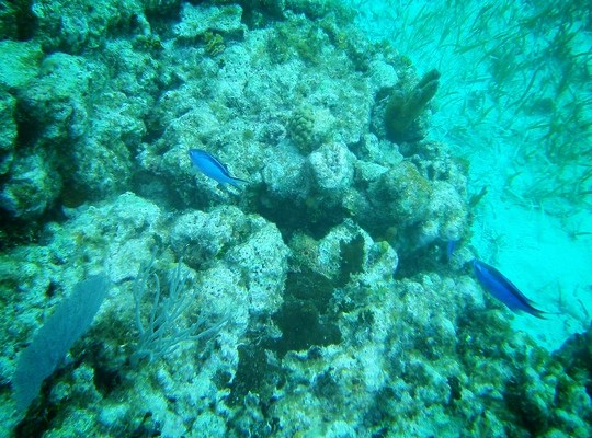 Snorkeling in Caye Caulker  Belize